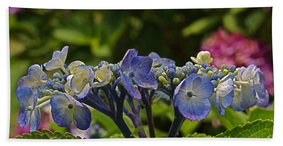Hydrangea Bath Sheet featuring the photograph Hydrangea Blossoms by Byron Varvarigos