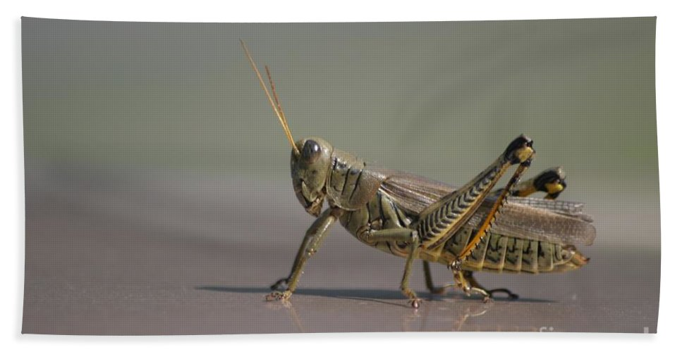 Grasshopper Bath Sheet featuring the photograph I Am Sexy And I Know It by Living Color Photography Lorraine Lynch