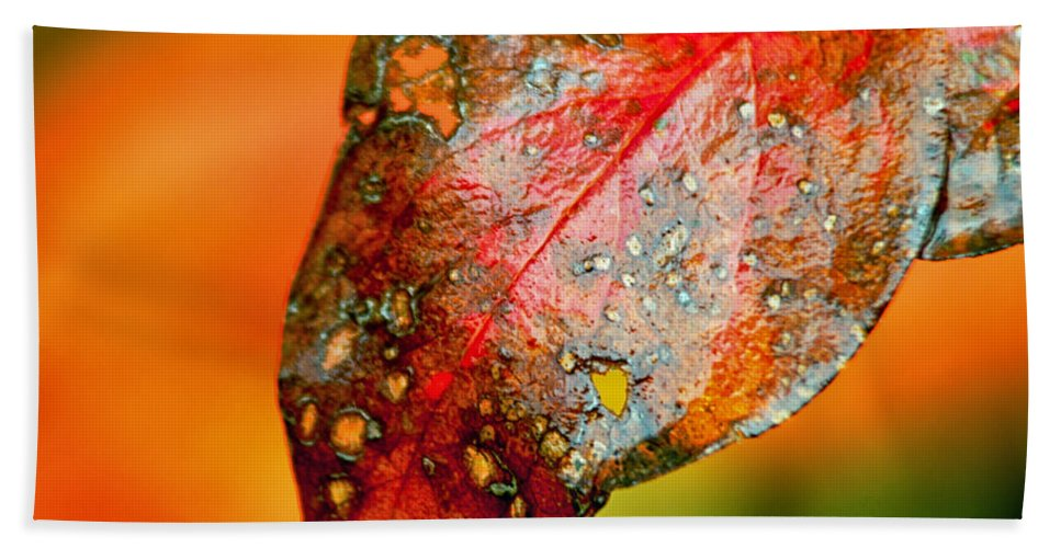 Leaf Hand Towel featuring the photograph I Love Fall by Lauri Novak