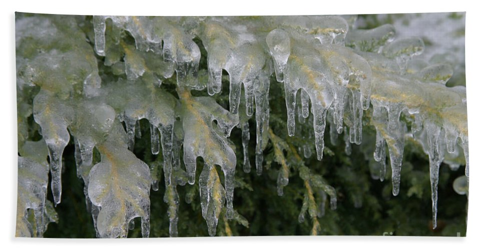 Weather Hand Towel featuring the photograph Ice-coated Arborvitae by Ted Kinsman