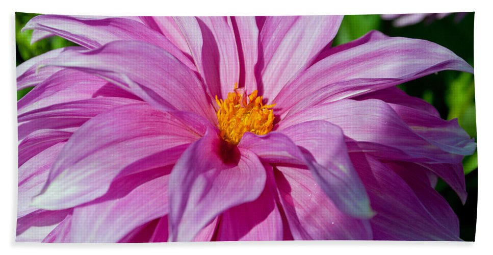 Ice Pink Hand Towel featuring the photograph Ice Pink Dahlia by Tikvah's Hope