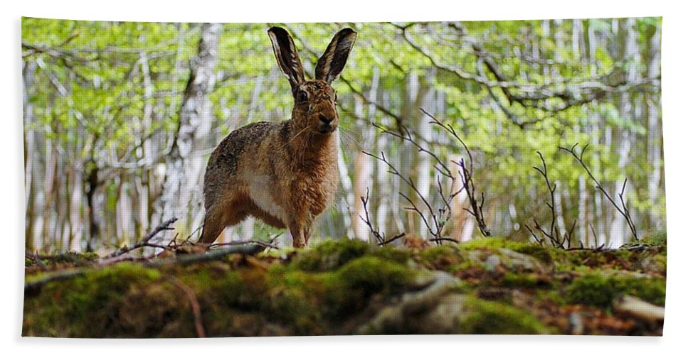 Brown Hare Hand Towel featuring the photograph I'm All Ears by Gavin Macrae