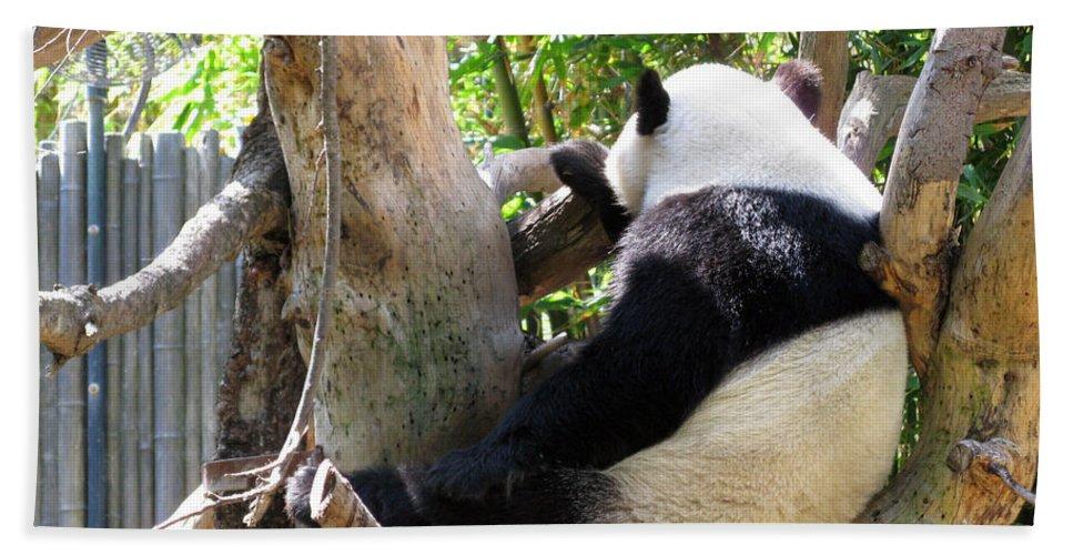 Giant Panda Bath Sheet featuring the photograph I'm Not Talking To You by Ausra Huntington nee Paulauskaite