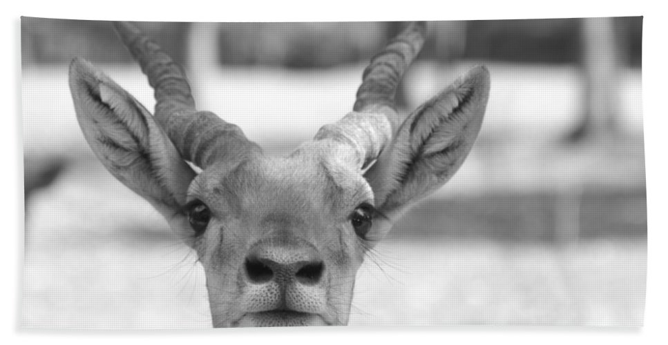 Impala Hand Towel featuring the photograph Impala -black And White by Douglas Barnard