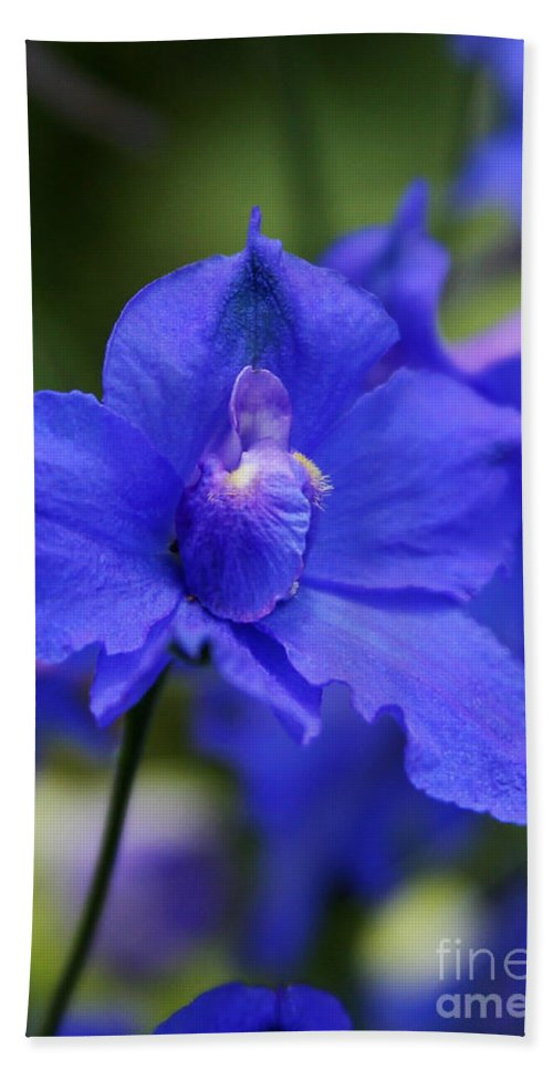 Blue Hand Towel featuring the photograph In A Blue Mood by Sabrina L Ryan