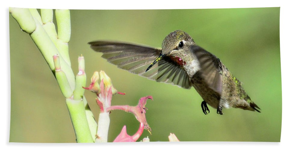 Anna's Hummingbird Bath Sheet featuring the photograph In For A Landing by Saija Lehtonen