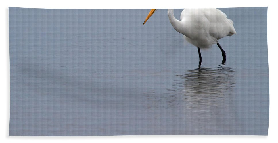 Egret Bath Sheet featuring the photograph In Search Of by Karol Livote