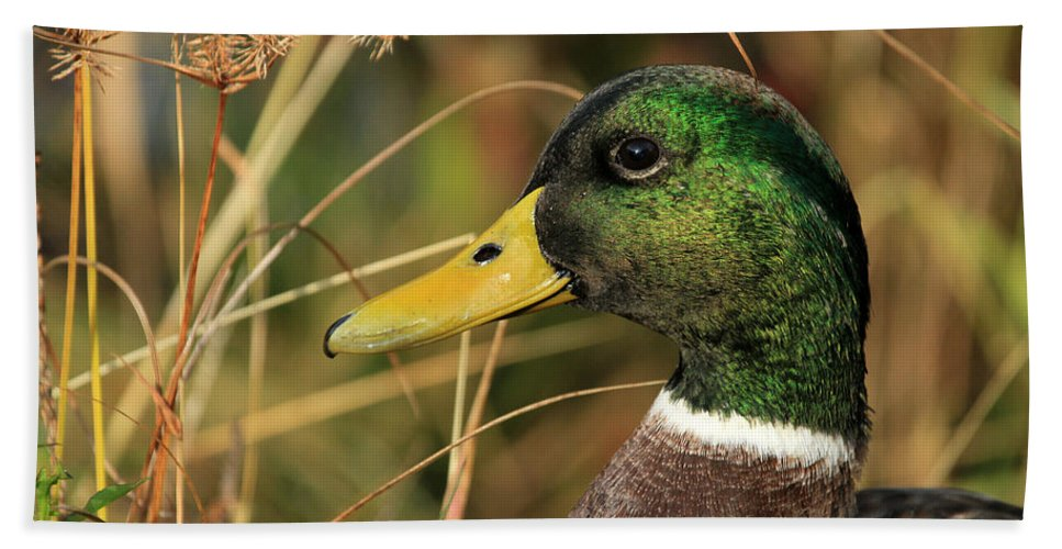 Mallard Bath Sheet featuring the photograph In The High Weeds by Karol Livote