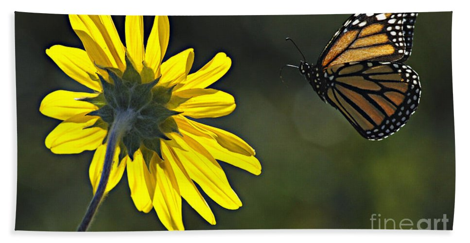 Monarch Hand Towel featuring the photograph Incoming Monarch by Bob Christopher