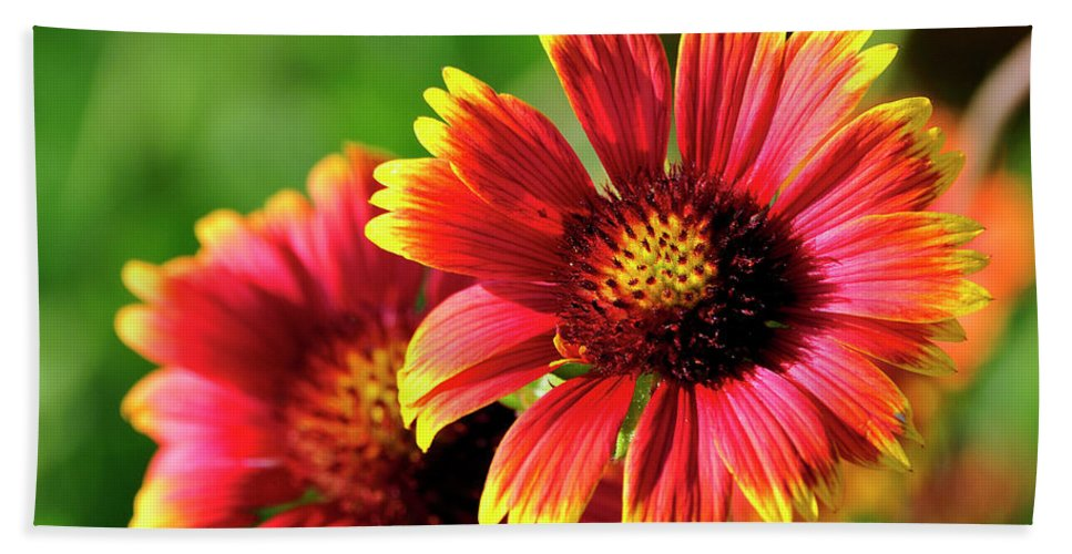 Flower Hand Towel featuring the photograph Indian Blanket by Bill Dodsworth