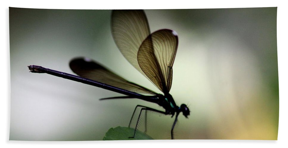 Damsel Fly Bath Sheet featuring the photograph Insect Photo - The Hunter - Ebony Jewelwing by Travis Truelove