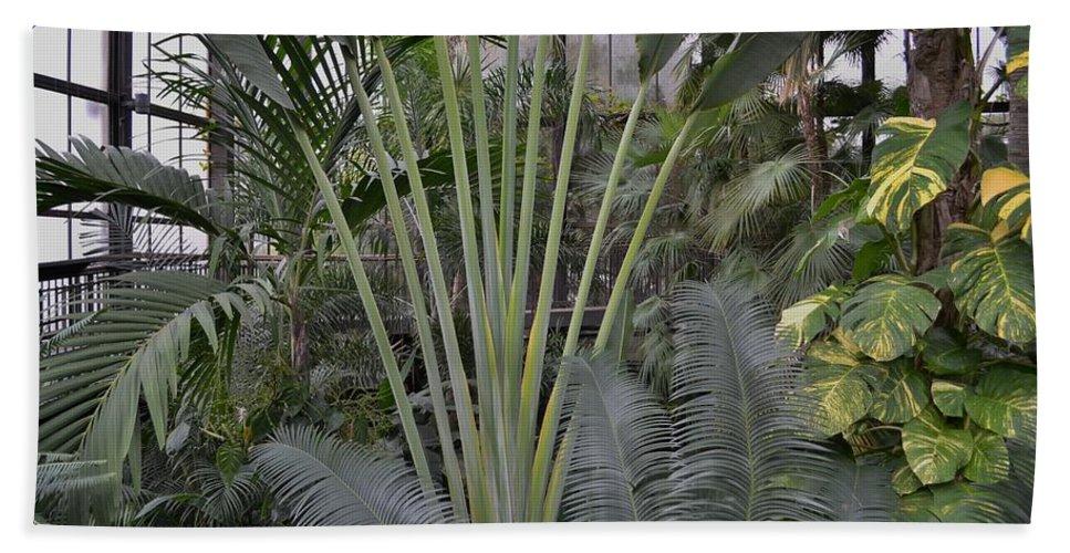 Jungle Plants Bath Sheet featuring the photograph Inside Jungle by Wanda J King
