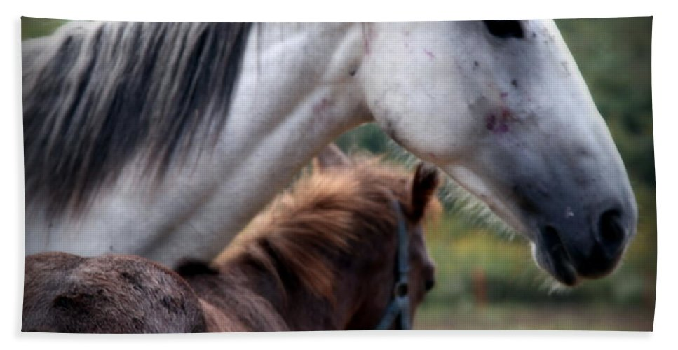 Horses Hand Towel featuring the photograph Instinct Of Love by Karen Wiles