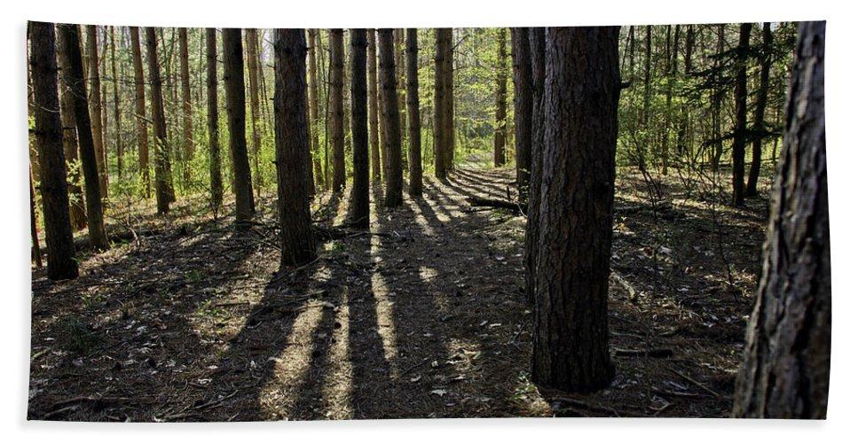 Woods Bath Sheet featuring the photograph Into The Woods Spnc Michigan by LeeAnn McLaneGoetz McLaneGoetzStudioLLCcom