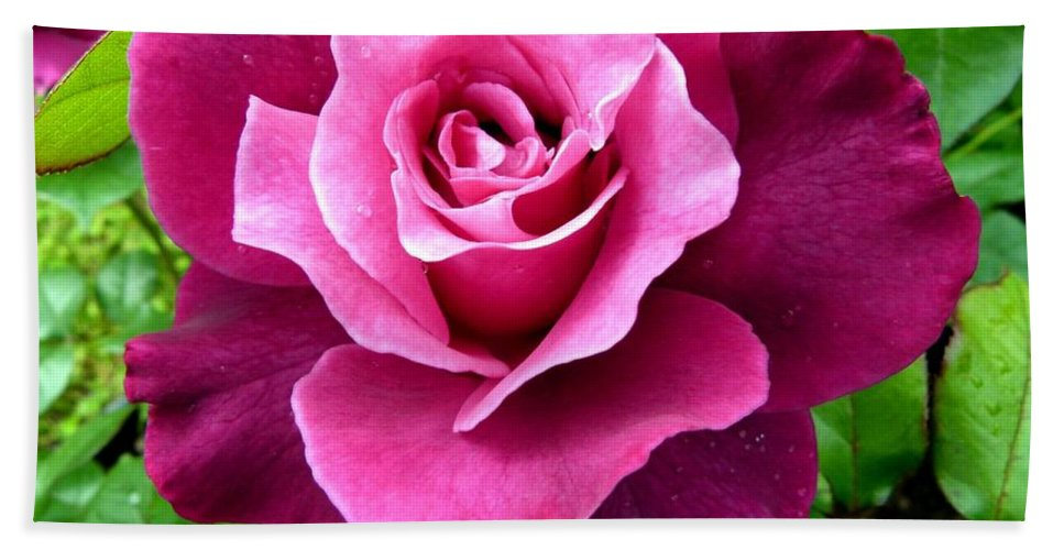 Intrigue Rose Hand Towel featuring the photograph Intrigue Rose by Will Borden