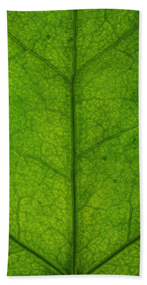 Gadomski Bath Sheet featuring the photograph Ivy Leaf by Steve Gadomski