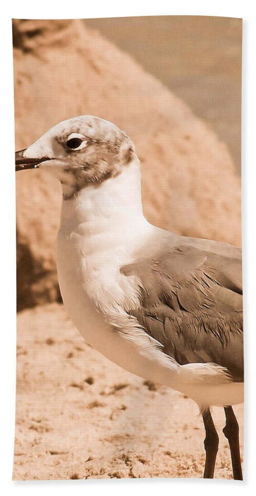 Seagull Bath Sheet featuring the photograph Jagr by Trish Tritz