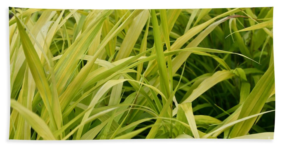 Floral Bath Sheet featuring the photograph Japanese Forest Grass by Susan Herber