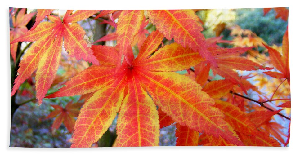Fall Hand Towel featuring the photograph Japanese Maple Leaves 13 In The Fall by Duane McCullough