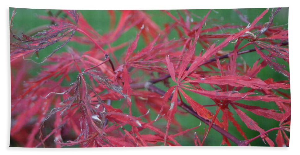 Red Leaf Bath Sheet featuring the photograph Japanese Red Leaf Maple Hybrid by Leann DeBord