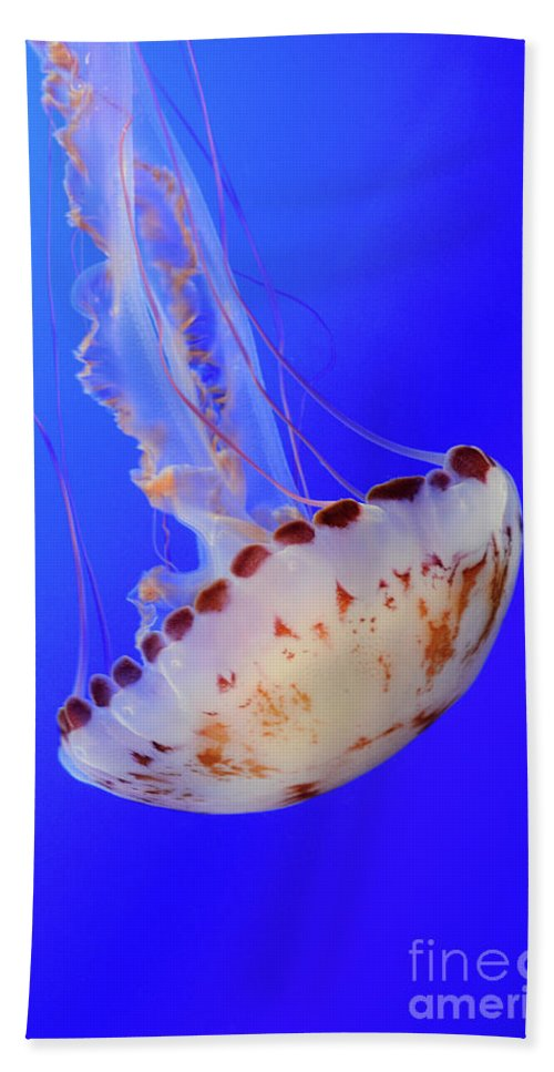 Jellyfish Hand Towel featuring the photograph Jellyfish 4 by Bob Christopher