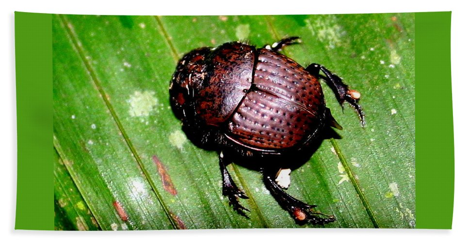Beetle Bath Towel featuring the photograph Jungle Beetle by Laurel Talabere