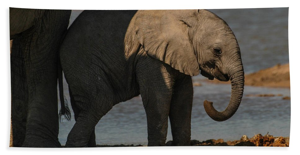 Focussed Hand Towel featuring the photograph Junior by Alistair Lyne