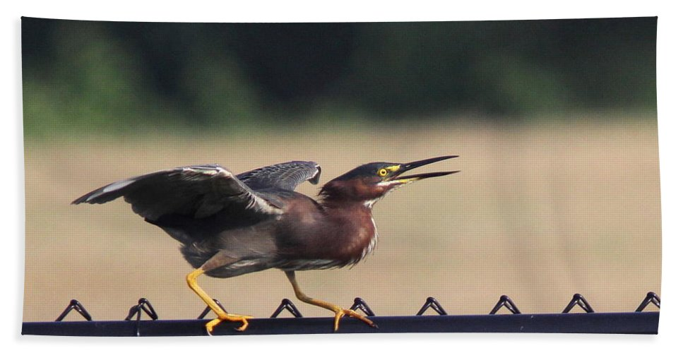 Green Heron Bath Sheet featuring the photograph Just A Bluff by Travis Truelove