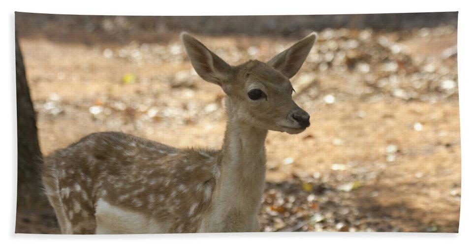 Juvenile Deer Hand Towel featuring the photograph Juvenile Deer by Douglas Barnard