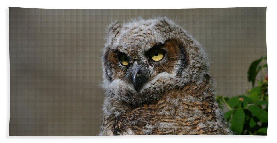 Alaska Hand Towel featuring the photograph Juvenile Great Horned Owl by Doug Lloyd