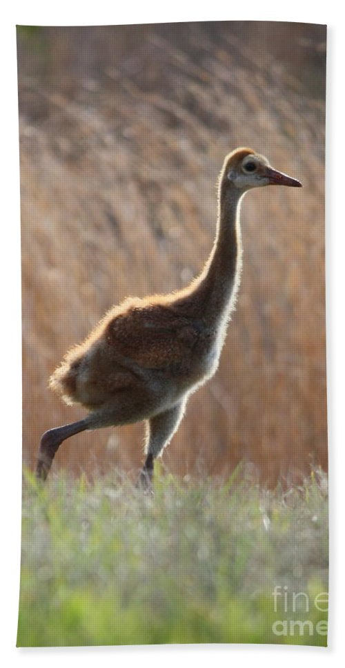 Sandhill Crane Hand Towel featuring the photograph Juvenile Sandhill In The Marsh by Carol Groenen