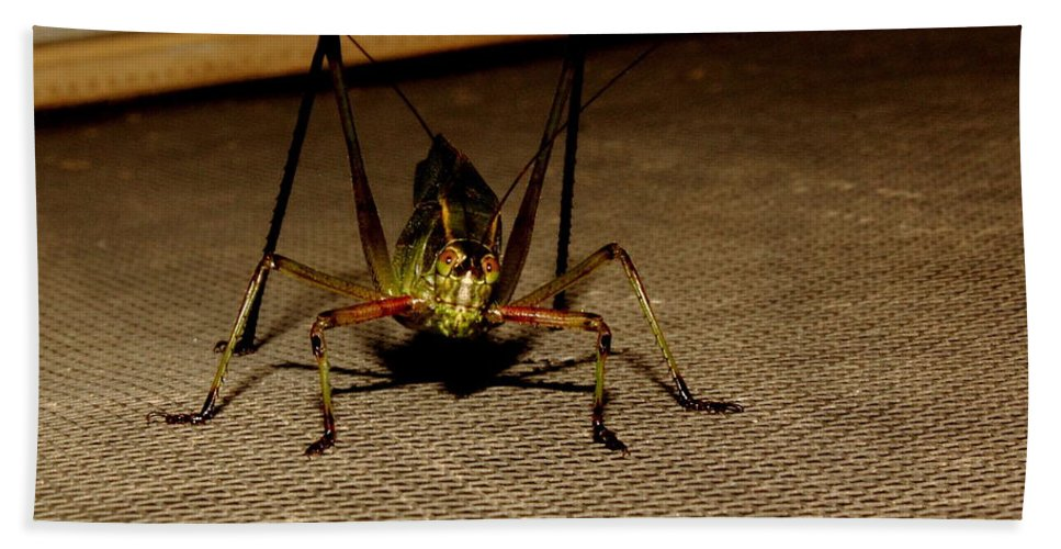 Insect Hand Towel featuring the photograph Katydid by Robert Frederick