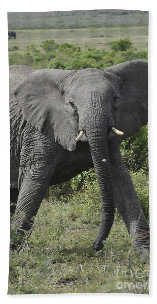 Aggression Bath Sheet featuring the photograph Kenya Masai Mara Charging Elephant by Amir Paz