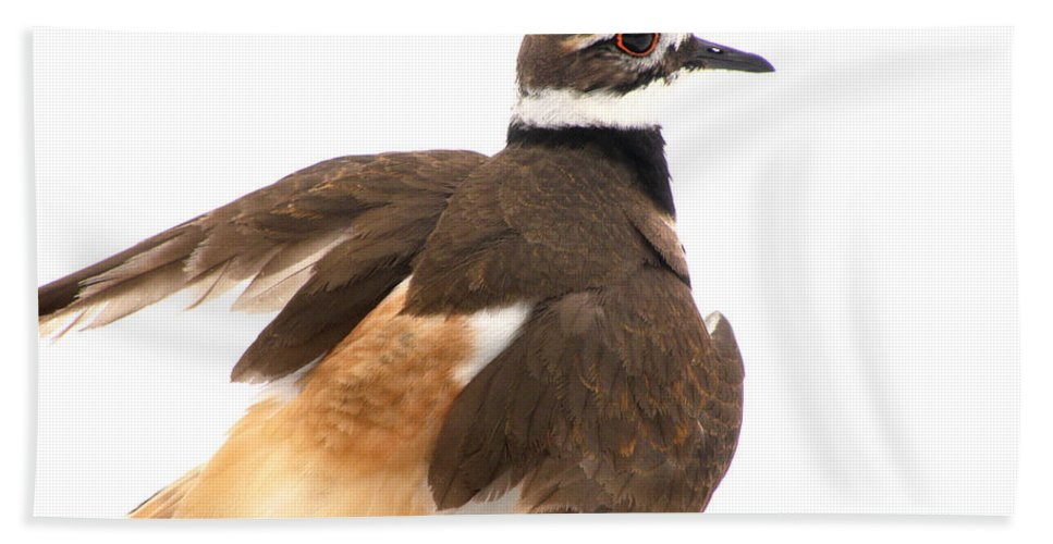 Killdeer Bath Sheet featuring the photograph Killdeer - Show Off In The Spring Snow by Angie Rea