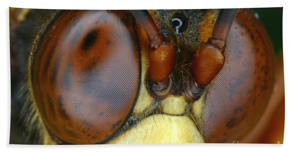 Wasp Hand Towel featuring the photograph Killer Wasp by Ted Kinsman