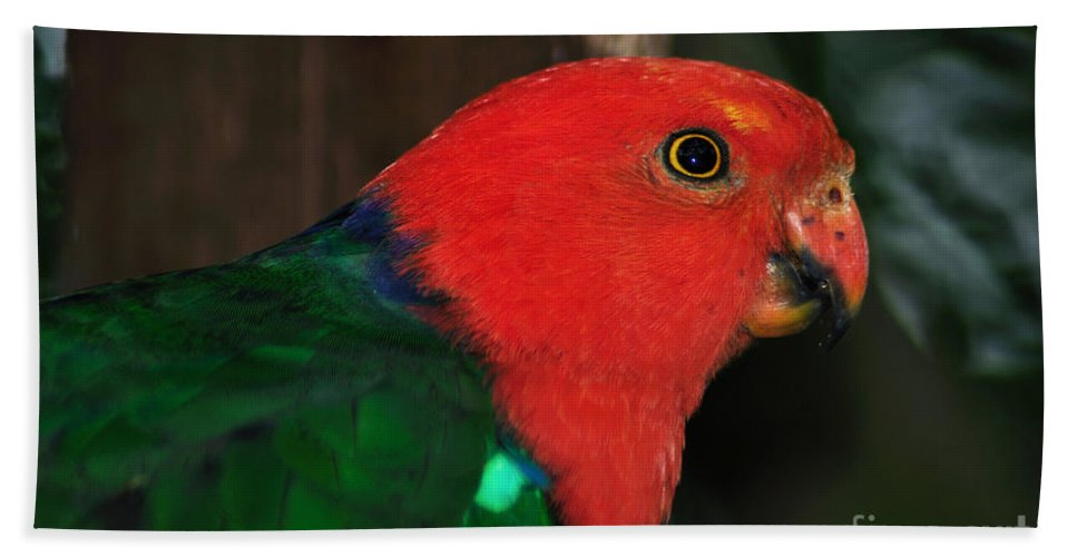 Photography Hand Towel featuring the photograph King Parrot - Male 2 by Kaye Menner