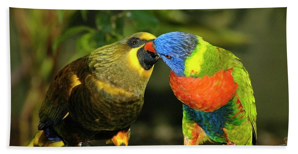 Lorikeet Bath Sheet featuring the photograph Kissing Birds by Carolyn Marshall