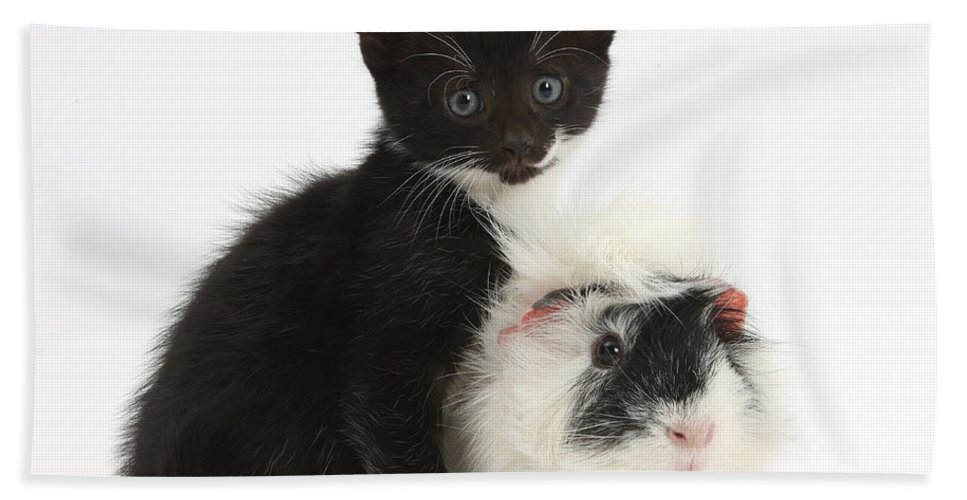 Nature Hand Towel featuring the photograph Kitten And Guinea Pig by Mark Taylor