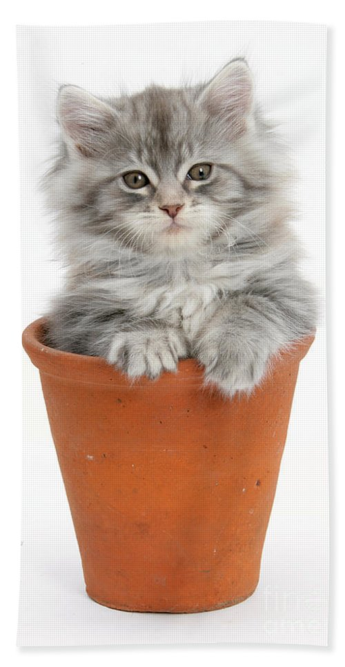 Animal Hand Towel featuring the photograph Kitten In Pot by Mark Taylor