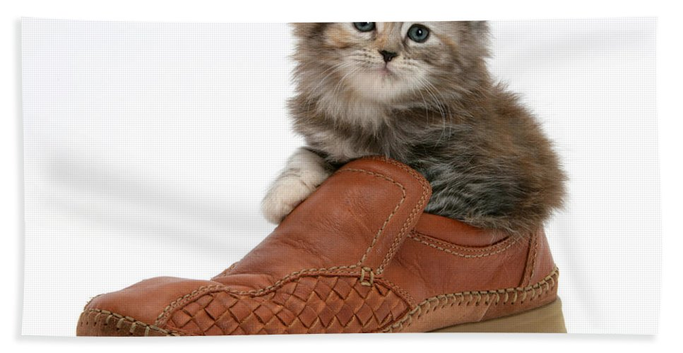 Animal Hand Towel featuring the photograph Kitten In Shoe by Mark Taylor