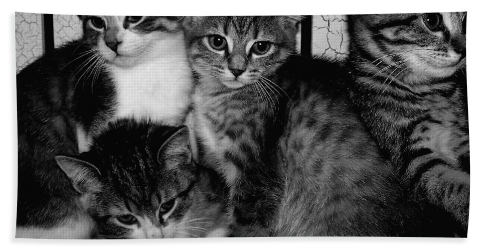 Digital Photos Of Cats Bath Sheet featuring the photograph Kittens Corner by Christy Leigh
