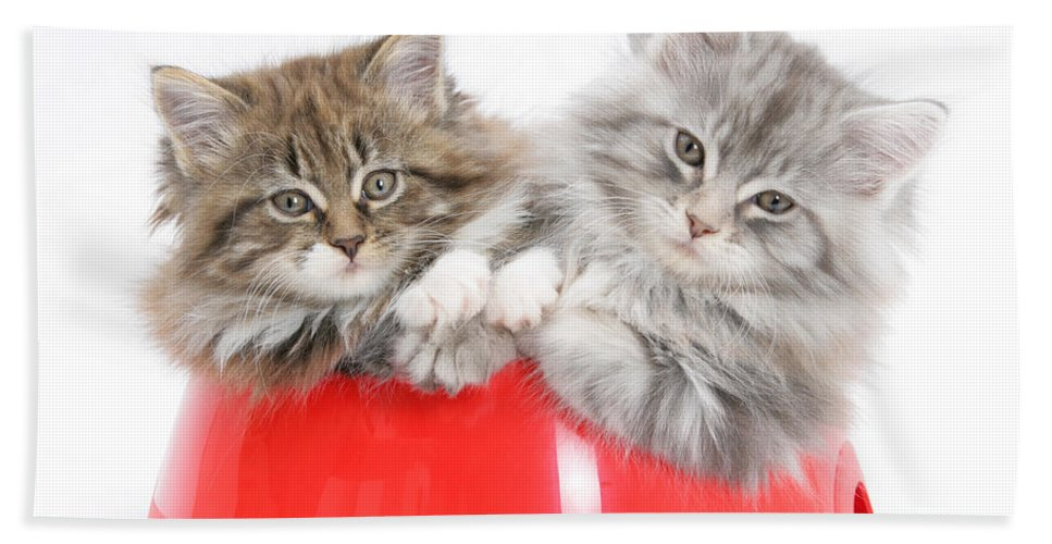 Animal Hand Towel featuring the photograph Kittens In A Food Bowl by Mark Taylor
