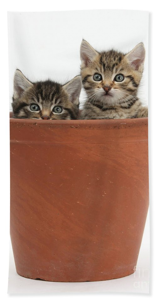 Nature Hand Towel featuring the photograph Kittens In Flowerpot by Mark Taylor