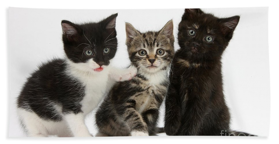 Animal Hand Towel featuring the photograph Kittens by Mark Taylor