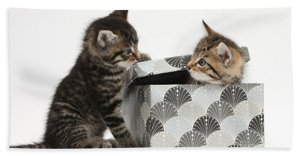Animal Hand Towel featuring the photograph Kittens Playing With Box by Mark Taylor