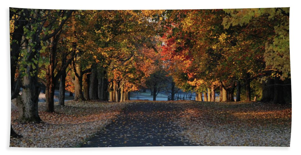 Tree Bath Sheet featuring the photograph Knox Fall 8554 by Guy Whiteley