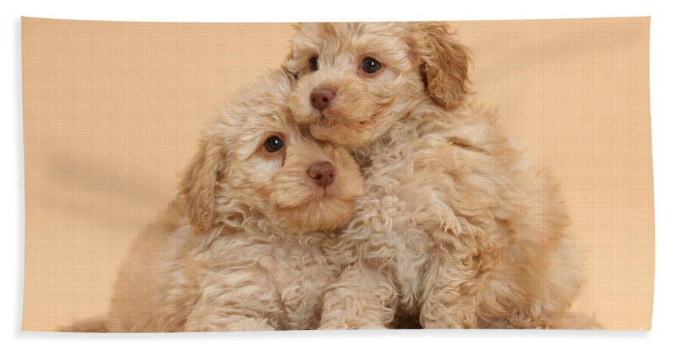 Nature Hand Towel featuring the photograph Labradoodle Puppies by Mark Taylor