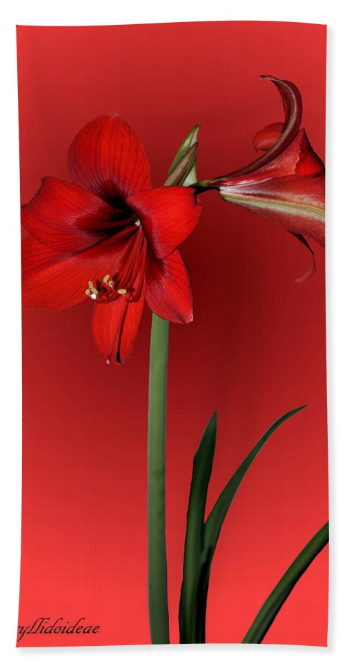 Amaryllis Bath Sheet featuring the photograph Lady In Red by Kristin Elmquist