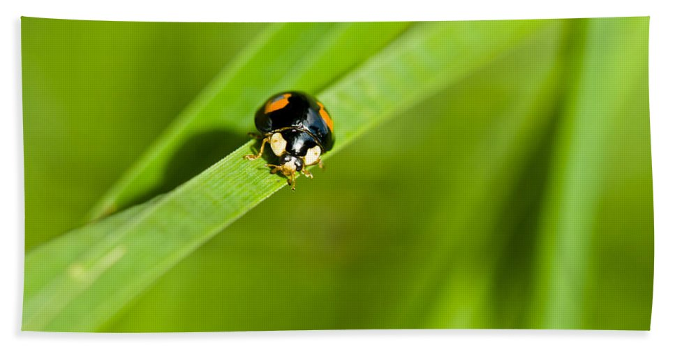 Animal Bath Sheet featuring the photograph Ladybug With Black-brown And Red Color by U Schade
