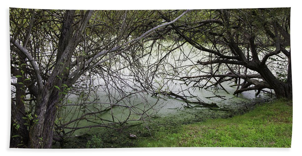 Tree Bath Sheet featuring the photograph Lakeside View 1 by Madeline Ellis